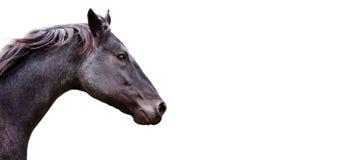 Bello cavallo su priorità bassa bianca Immagine Stock
