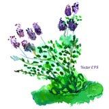 Bello cespuglio lilla Fotografia Stock