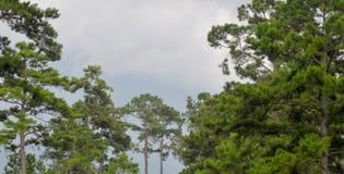 Bello cielo con gli alberi immagini stock libere da diritti