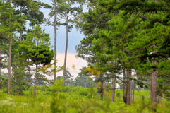 Bello cielo con gli alberi immagine stock libera da diritti