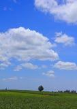Bello cielo della nuvola sopra verde del giacimento della manioca o della manioca Immagine Stock Libera da Diritti