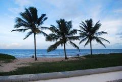 bello cielo di purezza di colore del giardino di fiori di vista della natura della palma immagini stock