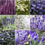 Bello collage dei fiori Immagine Stock Libera da Diritti