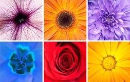 Bello collage dei fiori - macro colpi Fotografia Stock Libera da Diritti