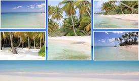 Bello collage delle immagini tropicali, spiaggia, palme Fotografia Stock