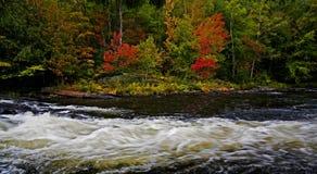 Bello colore di autunno lungo un allungamento selvaggio del fiume Fotografie Stock Libere da Diritti
