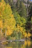 Bello colore di caduta in California immagine stock libera da diritti