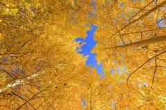 Bello colore di caduta in California immagine stock