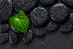 Bello concetto della stazione termale della calla verde della foglia sullo sto del basalto di zen Immagini Stock Libere da Diritti