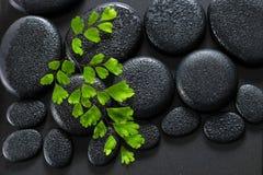 Bello concetto della stazione termale della felce verde di adianto del ramoscello sul basalto di zen Fotografie Stock