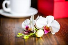 Bello concetto festivo della scatola rossa accogliente con l'arco, orchidea f fotografie stock