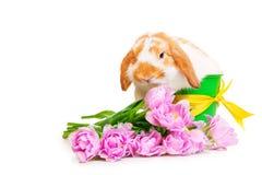Bello coniglio con i fiori su fondo bianco Immagine Stock