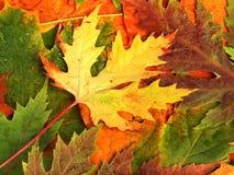 Bello contesto dei fogli di autunno caduti Immagine Stock