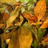 Bello contesto delle foglie di autunno cadute Fotografie Stock