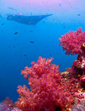 Bello corallo molle Fotografie Stock