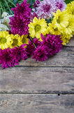 Bello crisantemo Fotografia Stock Libera da Diritti