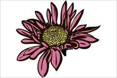 Bello crisantemo del fiore di autunno Immagine Stock Libera da Diritti
