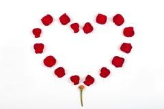 Bello cuore dei petali di rosa rossi Immagine Stock