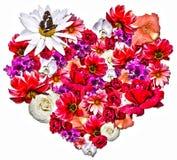 Bello cuore fatto dei fiori differenti su fondo bianco Immagine Stock