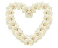 Bello cuore fatto delle orchidee giallo-chiaro Fotografie Stock Libere da Diritti