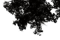 Bello delle siluette dell'albero isolato su fondo bianco immagini stock libere da diritti