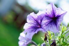 Bello disegno del fiore fotografie stock