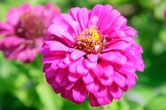 Bello disegno del fiore Fotografia Stock Libera da Diritti