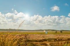 Bello e campo pacifico di estate nella campagna con il chiarore della lente e del sole nel fondo Fotografia Stock
