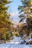 Bello e paesaggio calmo di inverno immagini stock libere da diritti