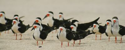 Gabbiani sulla sabbia Immagini Stock