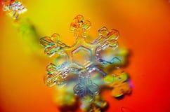 Bello fiocco di neve unico Fotografie Stock Libere da Diritti