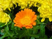 Bello fiore Immagine Stock
