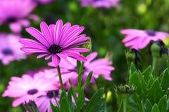 Bello fiore Fotografie Stock Libere da Diritti