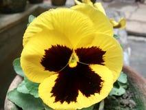 Bello fiore Immagini Stock Libere da Diritti