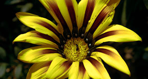 Bello fiore Immagine Stock Libera da Diritti