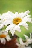 Bello fiore Fotografia Stock