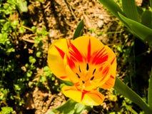 Bello fiore Fotografia Stock Libera da Diritti