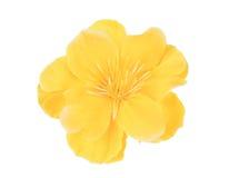 Bello fiore artificiale giallo Fotografie Stock Libere da Diritti