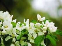 Bello fiore bianco Fotografia Stock