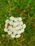 Bello fiore bianco Fotografie Stock Libere da Diritti