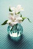 Bello fiore bianco - Alstroemeria o giglio peruviano Fotografia Stock