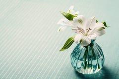 Bello fiore bianco - Alstroemeria o giglio peruviano Fotografia Stock Libera da Diritti