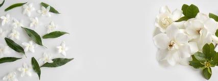 Bello fiore bianco di gardenia Fotografia Stock Libera da Diritti