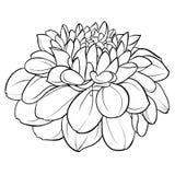 Bello fiore in bianco e nero monocromatico della dalia isolato su fondo Linee di contorno disegnate a mano Immagine Stock