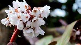 Bello fiore bianco nel giardino su un fondo insolito stock footage