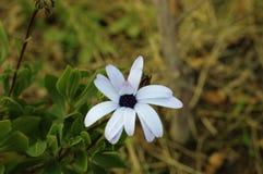 Bello fiore con colore piacevole Fotografia Stock Libera da Diritti