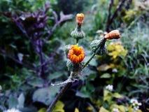 Bello fiore del hd Immagine Stock