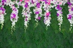 Bello fiore dell'orchidea su fondo verde Immagine Stock