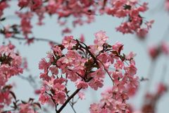 Bello fiore della begonia fotografia stock libera da diritti