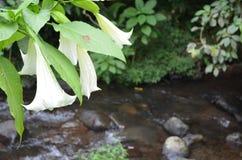 Bello fiore della riva del fiume Immagini Stock Libere da Diritti